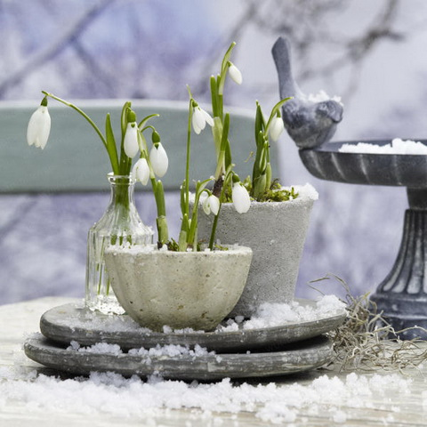 hóvirág kőkaspóban