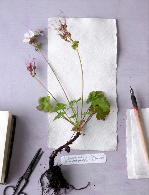 Gólyaorr botanika (1)