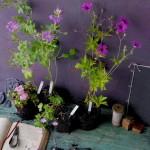 Légy botanikus