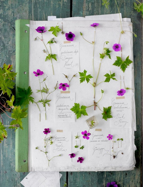 Gólyaorr botanika (3)