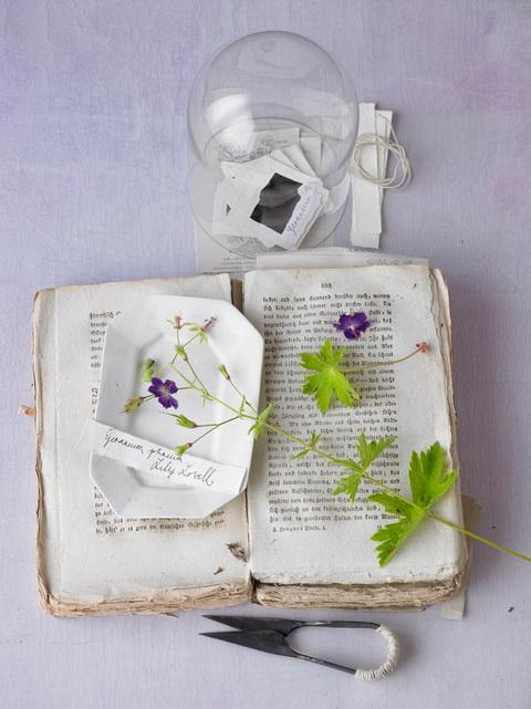 Gólyaorr botanika (8)