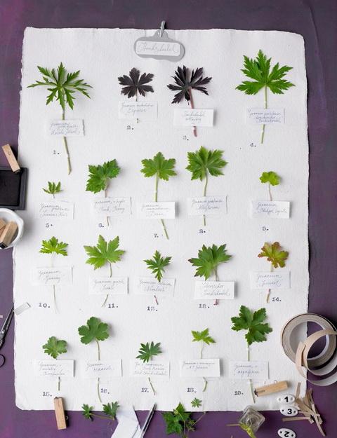 Gólyaorr botanika (9)