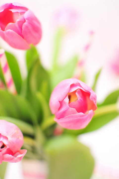 tavaszi tulipán csokor