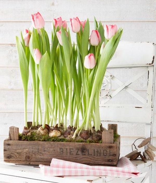 hajtatott tulipán