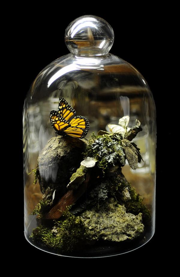 dekoratív üvegbura (10)
