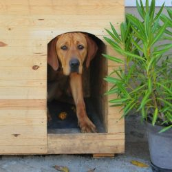 A fűthető kutyaház projekt